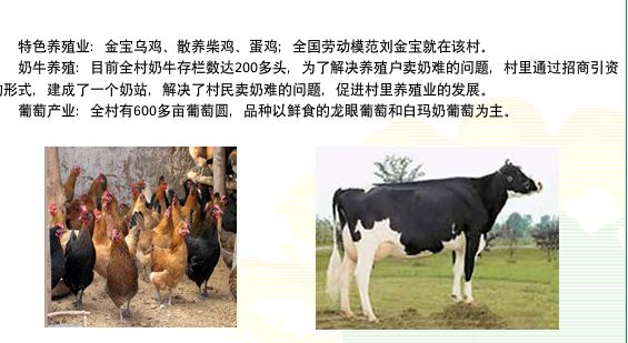 Chickens_cows